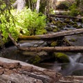 Fifteen Mile Creek.- Fifteen Mile Campground