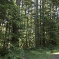 Upper Goodman Creek Trailhead.- Goodman Creek Trail Mountain Bike Ride
