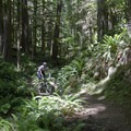 - Goodman Creek Trail Mountain Bike Ride