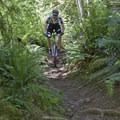 One of the more techinical sections of Goodman Creek Trail.- Goodman Creek Trail Mountain Bike Ride