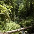 One of the creek crossings on Goodman Creek Trail.- Goodman Creek Trail Mountain Bike Ride