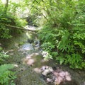 There are a number of small creeks in the area.- Mary S. Young State Recreation Area