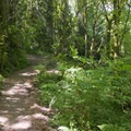 Mary S. Young trail system.- Mary S. Young State Recreation Area