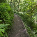 One of the trails at Mary S. Young State Recreation Area.- Mary S. Young State Recreation Area