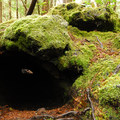 Looking into an impression left by the lava-burned old-growth forest.- Trail of Two Forests