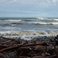 A high tide rendered turbid by recent rains.- Cape Meares Big Spruce + Beach Trail