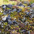 A close-up of the moss and lichen-covered lava.- Ape Caves