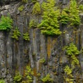 Growth along the canyon walls.- Lava Canyon