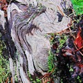Patterns in the wood mimicking the cooled lava patterns.- Lava Canyon