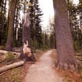 Nice wide trails for families.- Plaikni Falls Trail