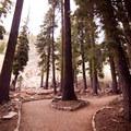 - Plaikni Falls Trail