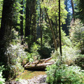 A creek running through the park.- Jedediah Smith Redwoods State Park