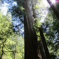 A view into the redwoods.- Jedediah Smith Redwoods State Park