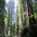 Visitors dwarfed by the redwoods.- Jedediah Smith Redwoods State Park