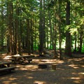Typical, heavily shaded site.- Walupt Lake Campground