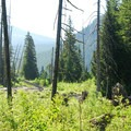 Walupt Creek from the campground.- Walupt Lake Campground