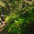 Walupt Lake Trail 101.- Nannie Peak/PCT Loop Hike