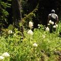Hiking along trail with extensive bear grass (Xerophyllum tenax).- Nannie Peak/PCT Loop Hike