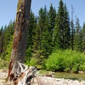 Crossing point along the Cispus River.- Walupt Creek Falls