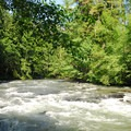 Cispus River at Cat Creek Campground.- Cat Creek Campground + Campsites