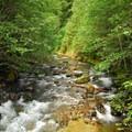 North Fork Cispus River.- North Fork Campground