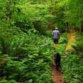 Camp Creek Falls trail.- Camp Creek Falls Hike