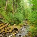 Looking back down Camp Creek.- Camp Creek Falls Hike