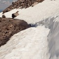 Snowpack on the trail in early July.- Watchman Trail to Watchman Tower