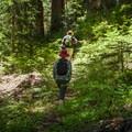 Hiking through lush old-growth on the Whetstone Mountain Trail.- Whetstone Mountain Hike