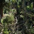 Negotiating around a fallen tree.- Whetstone Mountain Hike