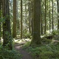 Salmon Creek singletrack.- Salmon Creek Trail