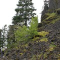 The grade slowly increases as you pass through trees in the rock fields.- Ruckel Ridge Loop Hike