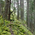 An example of the mossy and rocky trail.- Ruckel Ridge Loop Hike