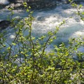 Metolius River from Candle Creek Campground.- Candle Creek Campground