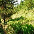 Thick foliage along the Bearberry Trail.- Leadbetter Point Loop Hiking Trail