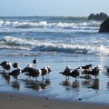 Sea Gulls flocking to Whaleshead Beach.- Whaleshead Beach
