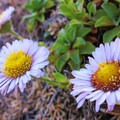 Wild flowers at Whaleshead Beach.- Whaleshead Beach