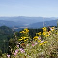 Wildflowers at the clifftop meadow.- Alpine Trail