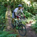 Log ride on the South Willamette Trail.- South Willamette Trail + Lower Hardesty Mountain Bike Ride