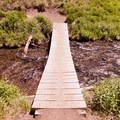 - Annie Creek Canyon Loop Trail