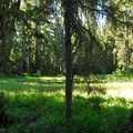 Marshy pond at the southern end of the campground.- Waldo Lake, Shadow Bay Campground