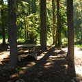 Site along the campground's eastern edge near a marshy pond.- Waldo Lake, Shadow Bay Campground
