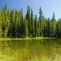 A marshy pond just east of campground.- Waldo Lake, Shadow Bay Campground