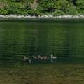 Carmen Reservoir.- Carmen Diversion Reservoir