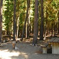 A 'multi-family' or double site featuring two picnic tables.- Waldo Lake, Islet Campground