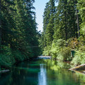 The McKenzie River headwaters leaving Clear Lake.- Clear Lake Trail