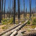 Walking through the remains of the Charlton fire of 1996.- Waldo + Rigdon Lakes Hike