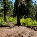 There are several sites in this very large area.- Fish Lake Campsites