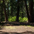 Please use existing fire rings.- Fish Lake Campsites