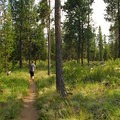 Fall River Trail through a loose lodgepole pine forest.- LaPine State Park
